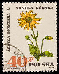 Poland - CIRCA 1966: A.HEIDRICH, Arnica Montana L. Arnika Gorska