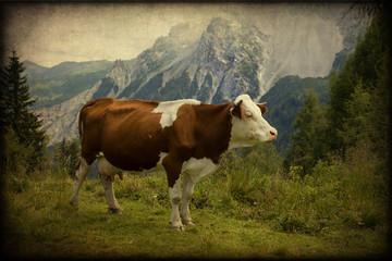 Mucca, Alpi, paesaggio, texture retro