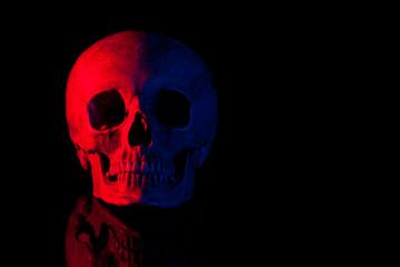 Scary human skull.