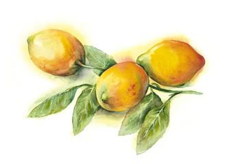 Watercolor -Lemons-