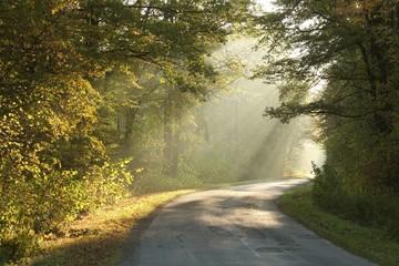 Keuken foto achterwand Bos in mist Lane running through the autumn forest in misty October morning