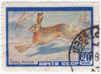 hare, circa 1961