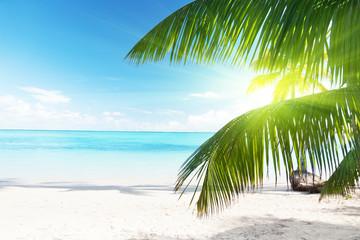 Obraz Palma i morze - fototapety do salonu