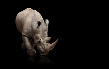 Photo sur Aluminium Rhino rhinoceros