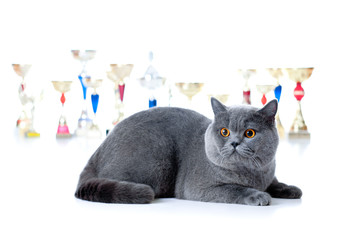 Papier Peint - Champion cat with cups isolated on white