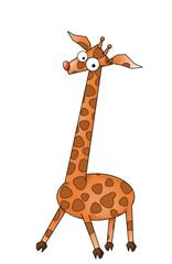 giraffe, picture