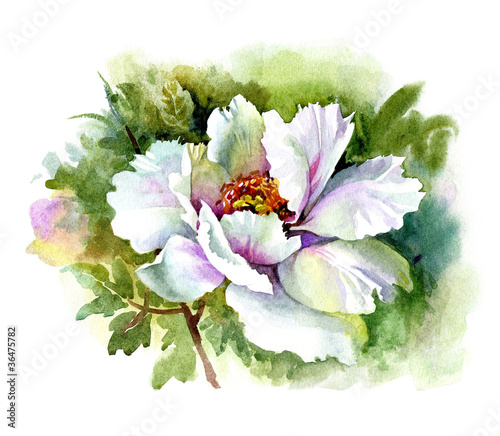 watercolor flower collection peony stock photo and. Black Bedroom Furniture Sets. Home Design Ideas