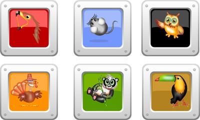 bottone animals