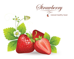 strawberries. vector illustration of a realistic