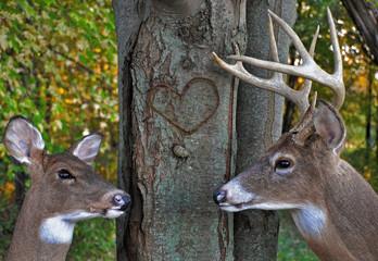wildlife romance
