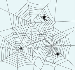 spiders and webs, vector