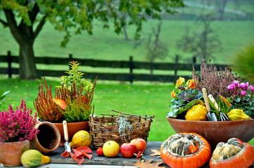 Pflanztisch im Herbst 6108