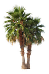 2 Palmen, freigestellt