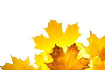 Fall maple leaves isolated on white