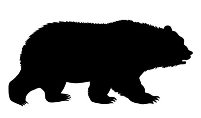 silhouette bear on white background