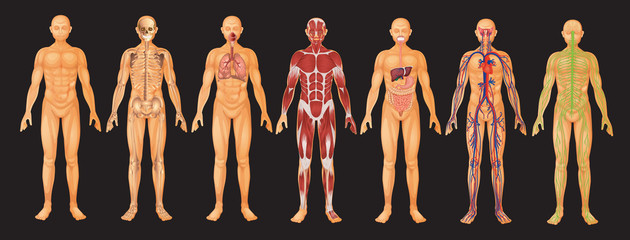 Image result for human body systems