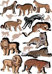set of big color cats illustration