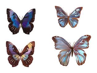four brown and blue butterflies