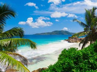 Dream Palms Landscape