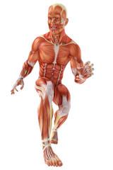 muscle man walking