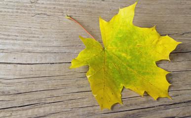 Gelbes Blatt auf Holz I