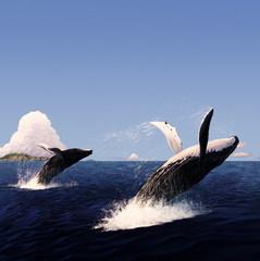 ザトウクジラのジャンプ