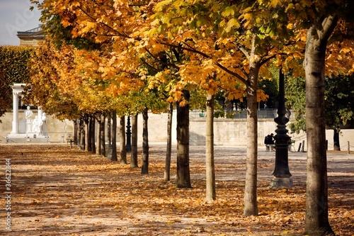 L 39 automne au jardin des tuileries paris photo libre de for Au jardin des tuileries