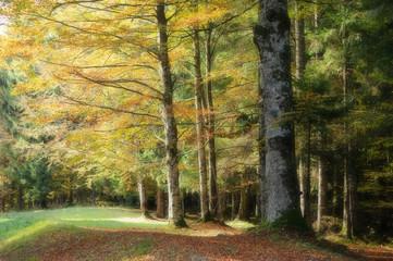 bosco del cansiglio 34a