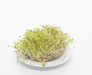 Germinated seeds of cress