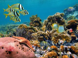 Tropical underwater marine in a thriving coral reef of the Caribbean sea