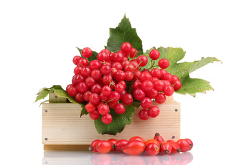 red berries of viburnum in wooden box and briar