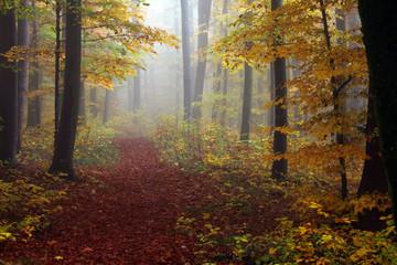 herbstliche Stimmung im Wald bei Nebel