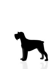 Silhouette cane, Schnauzer