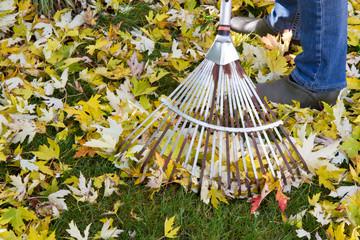 Herbstlaub rechen im Garten