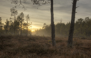 Misty morning, sweden