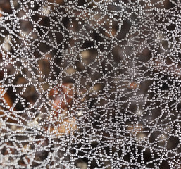 Wet spider web, macro photo