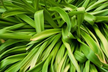 foglie 1746