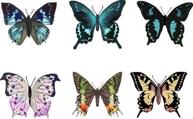 six color butterflies set