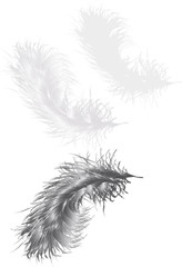 illustration with three grey feathers