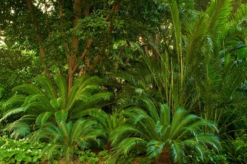 Beautiful tropical forest.
