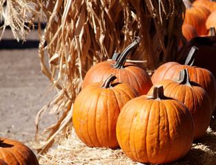 Orange Pumpkins sitting on straw