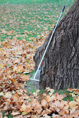 Rake and leaves in backyard or park