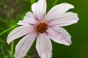 fiori 1372