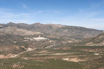 View over Olive Trees to Belmez De La Moraleda, Jaen Spain