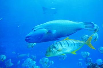 beautiful big two tropical fish in the ocean