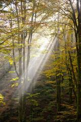 bosco del cansiglio 423