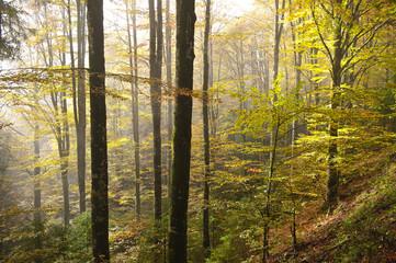 bosco del cansiglio 426