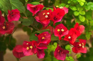 fiori 1376