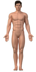 Naked man in anatomical position isolated