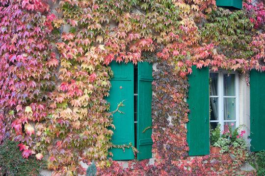 vigne vierge sur façade maison